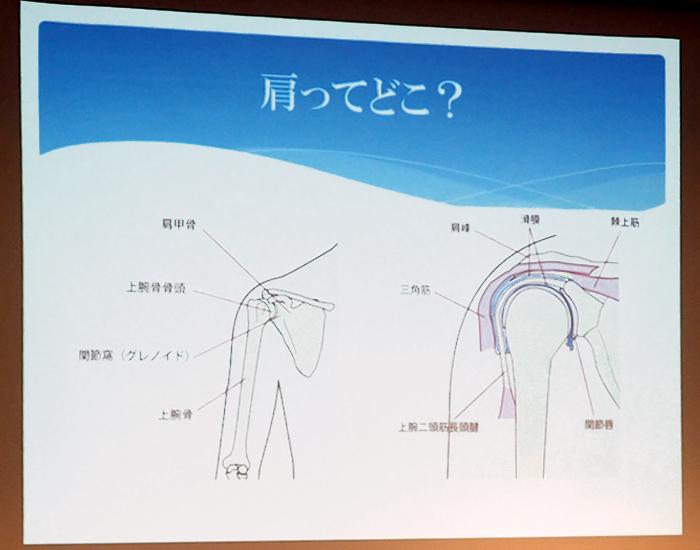 「肩ってどこ?」のスライド。肩の図解