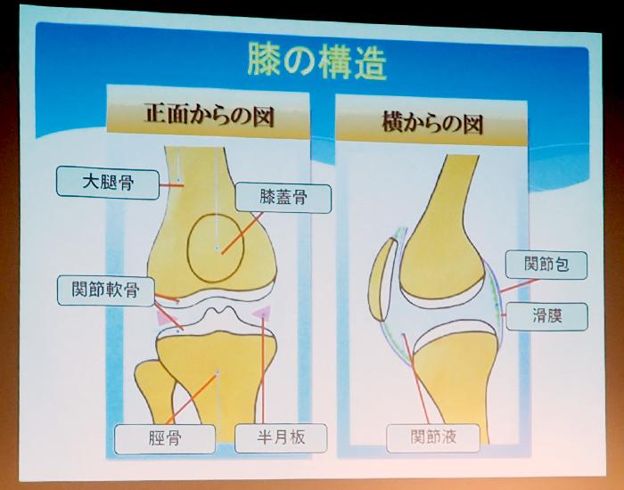 膝の構造の図解